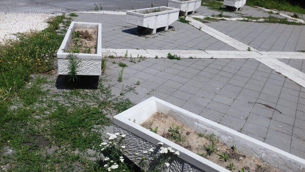 Meg kéne találni az egykori Rózsa park új funkcióját