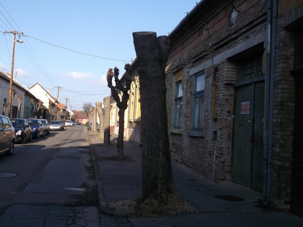 Kossuth utcai fák, isten veletek…